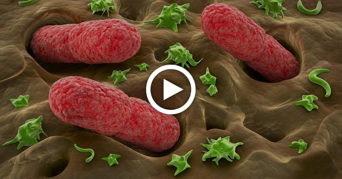 Listerien, EHEC, E-Coli: Das sind die 5 häufigsten Ursachen für Keime im Essen