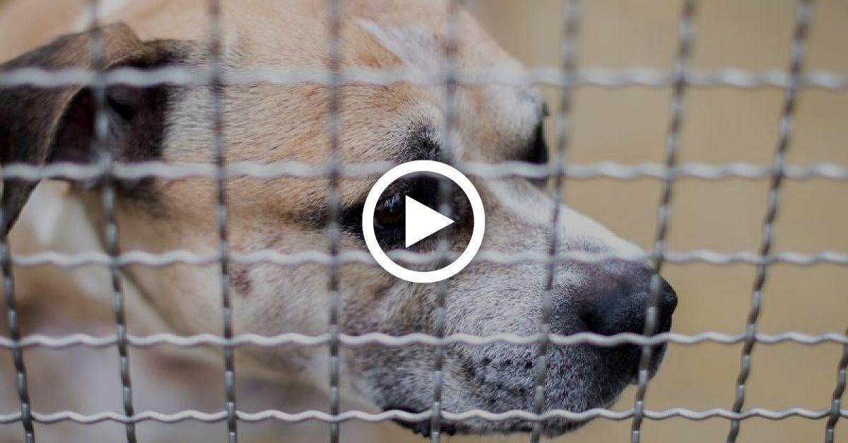 """Konsequenzen aus Fall """"Chico"""": Tierschützer fordern Hundeführerschein für ALLE Halter"""